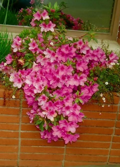flores de pared
