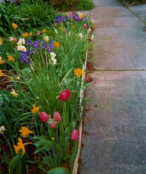 Color-lined walkway