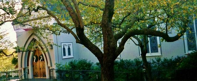 St. Paul's Tree
