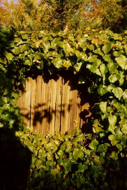 Ivy Keyhole