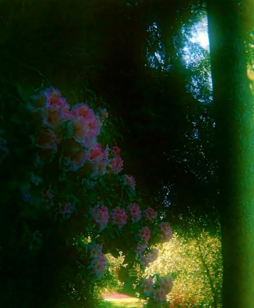 parksandflowers 001 - Copy