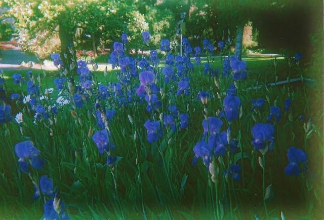 parksandflowers 003