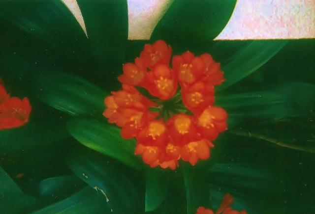 parksandflowers 004
