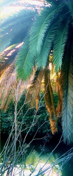 palm light