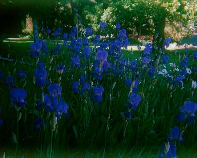 parkandflowers