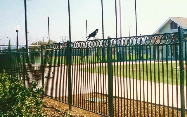 Albert's Park Bird